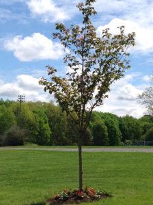 Sean Jucha memorial tree