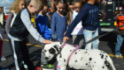 Students pet Dalmation fire dog