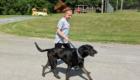 Student walks a dog