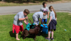 Students wash a dog