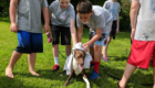 Students dry a dog with towel