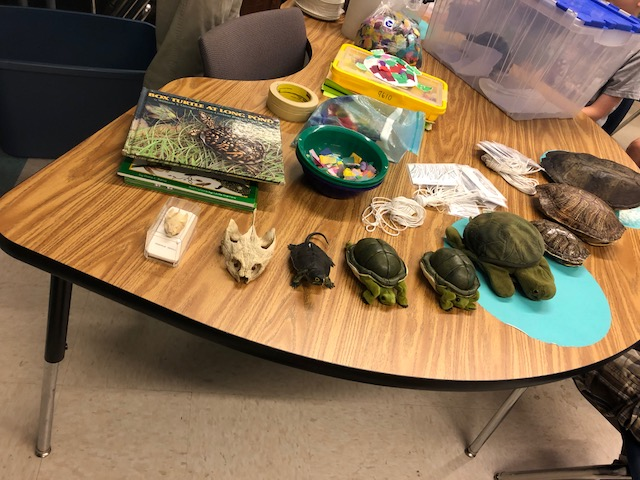 Display of turtle shells and books