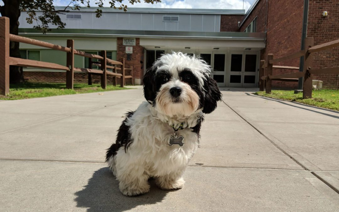 Goff Middle School Announces New Therapy Dog Program