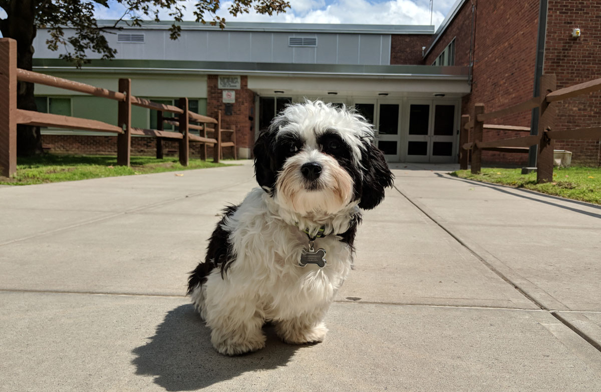 Bandit the therapy dog in front of Goff Middle School