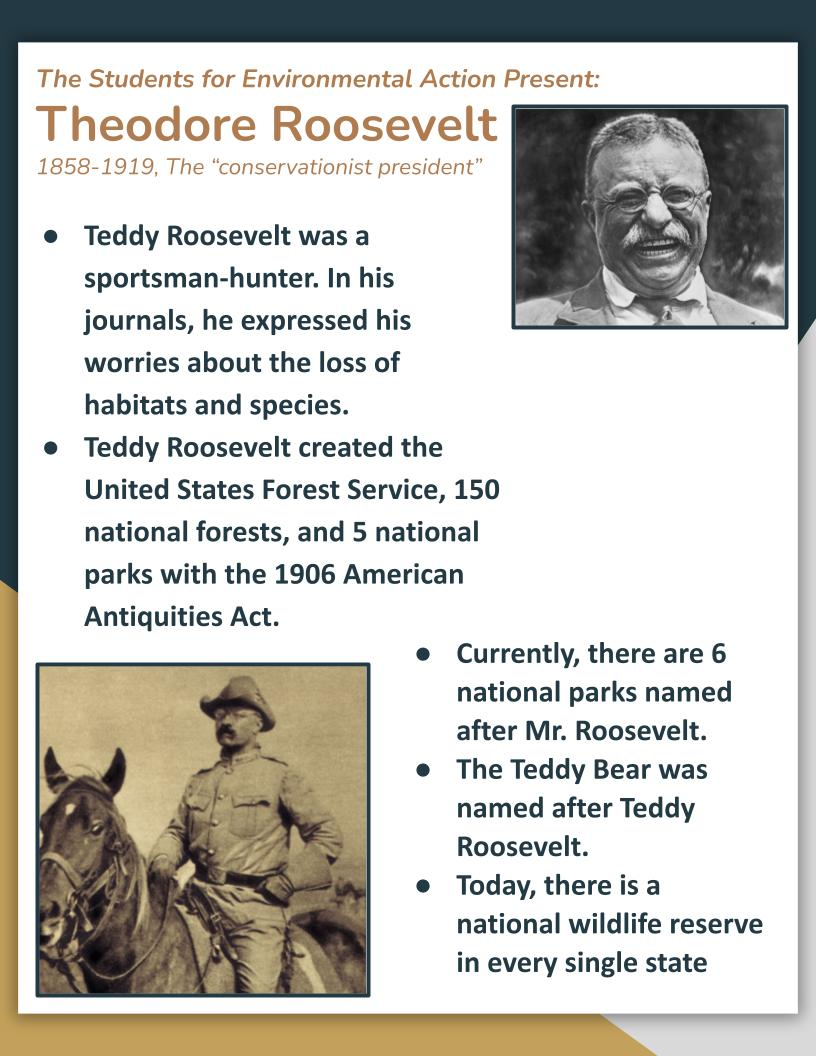 Theodore Roosevelt flyer